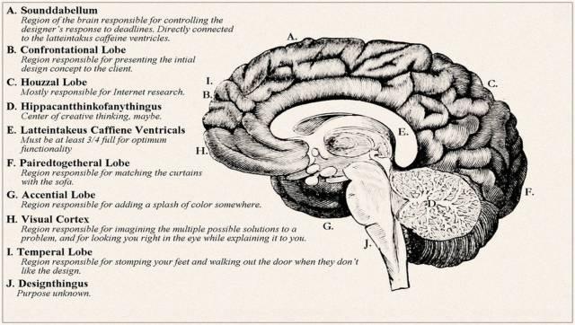 Brain of designer-2